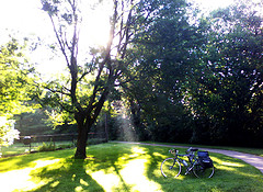 Sunbeams stream through the leaves of a large tree, beneath which is a bicycle.
